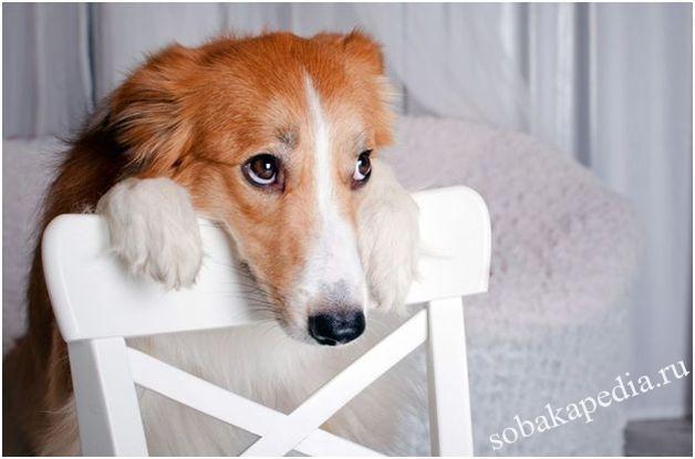 Лечение сахарного диабета у собак
