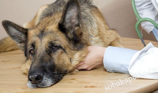 Лечение запора у собак