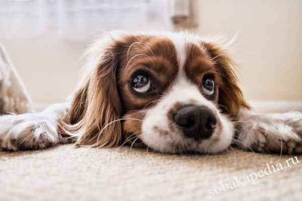 Причины запора у собак