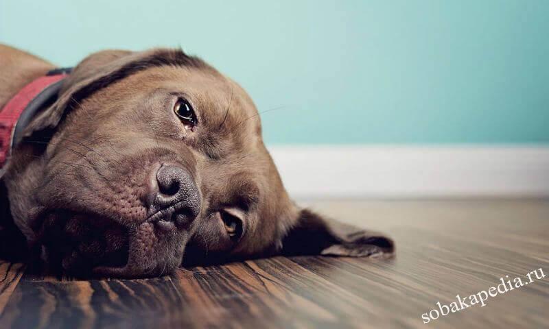 Симптомы запора у собак