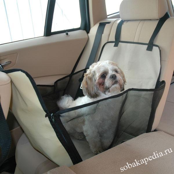 Поэтому главное и основное правило при первой поездке – собака должна быть обучена азам послушания. Взбалмошный питомец – бомба замедленного действия, никогда не знаешь, когда ее угораздит взорваться.