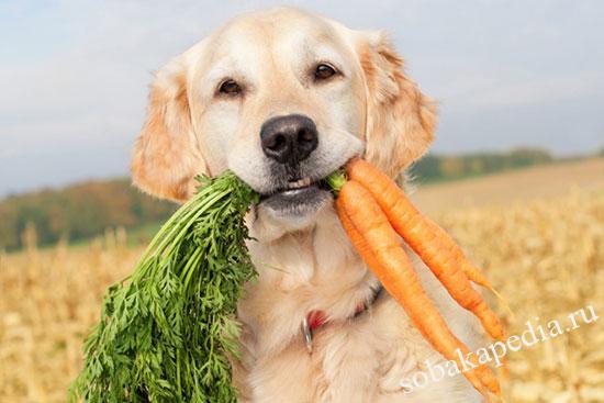 Чем можно и чем нельзя кормить щенков