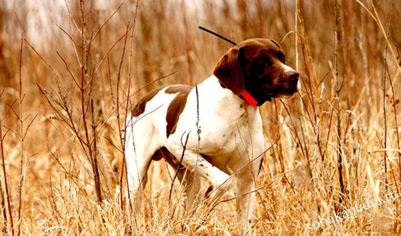 ошейник с GPS навигатором для собак