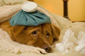 Отравление у собак: симптомы, лечение