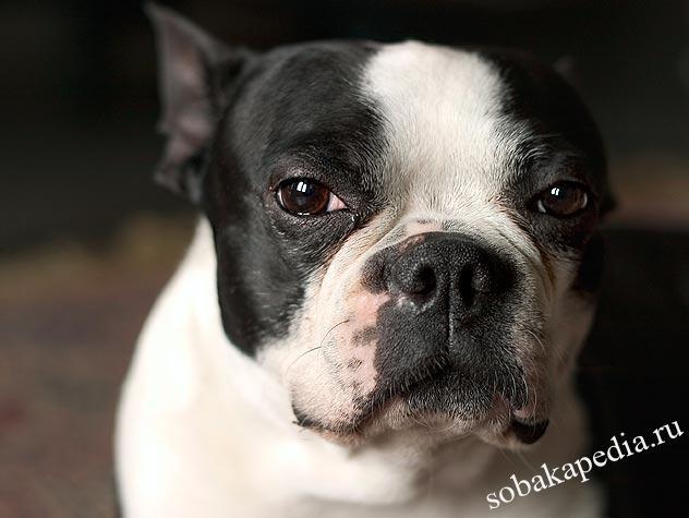 Причины рака у собак