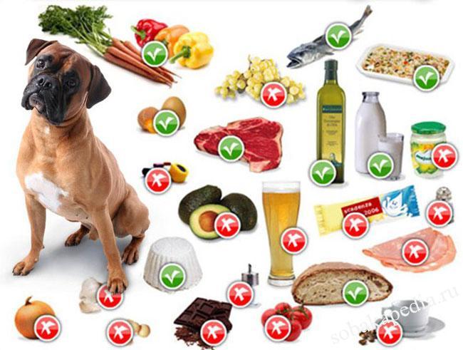 Натуральное питание собаки