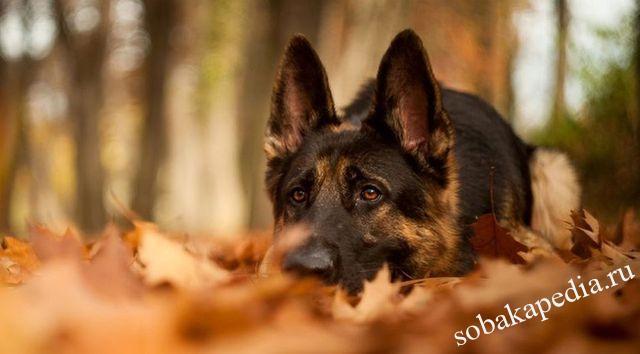 Профилактика цистита у собак