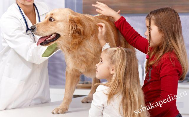 Профилактика рака у собак