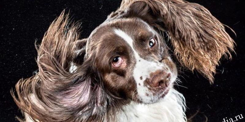 Собака трясет головой и чешет ухо: причины, чем помочь питомцу