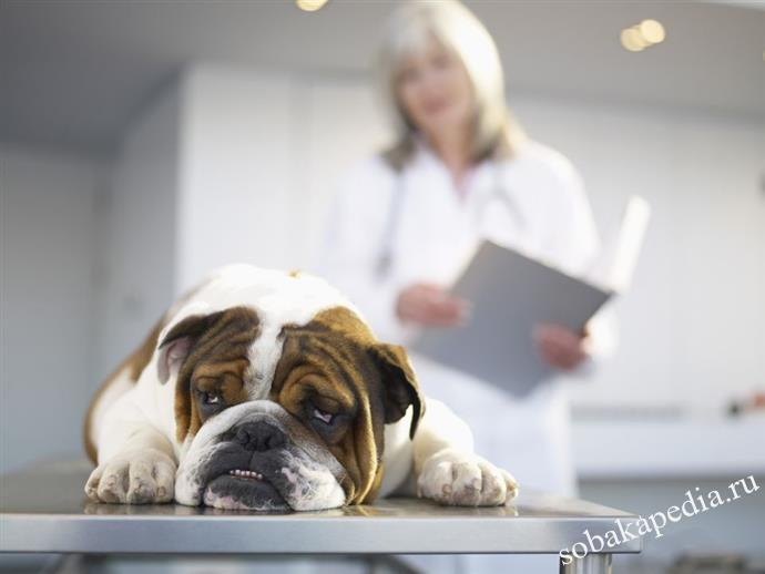 Лечение острой почечной недостаточности у собак