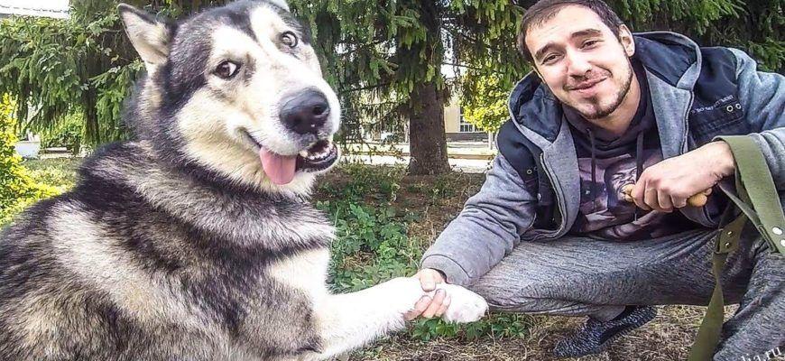 Эффективная дрессировка хаски - основа воспитания собаки