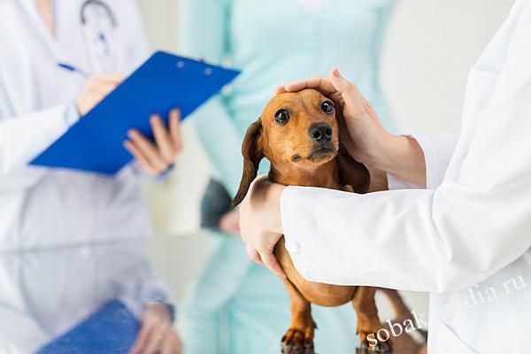 Почечная недостаточность у собак