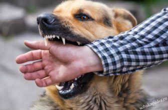 Как избежать агрессивного поведения и укусов собак
