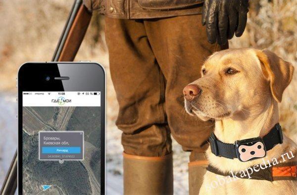 Ошейник с GPS для собак: что это, нужен ли, как выбрать