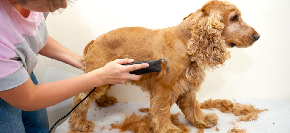 Как выбрать лучшую машинку для стрижки собак