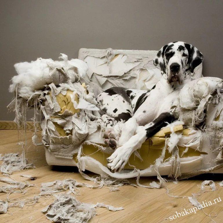 Как защитить мебель от вашего щенка