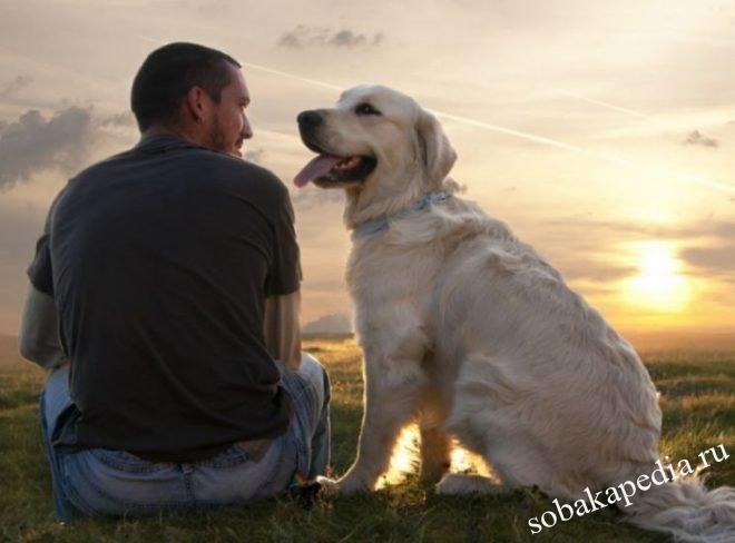 9 самых распространенных мифов о собаках. Мифы о собаках