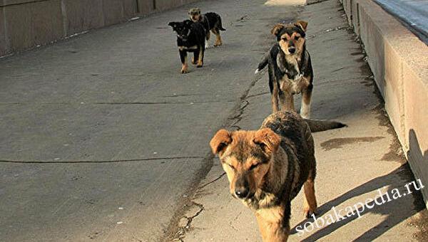 Проблема бездомных животных и пути ее решения