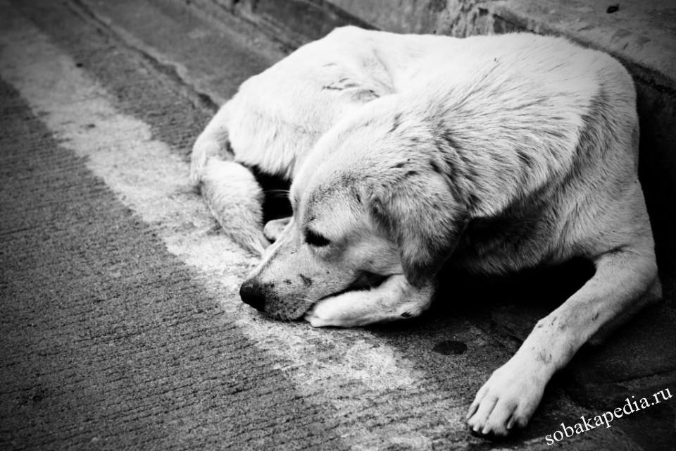 Бездомные собаки проблема каждого из нас