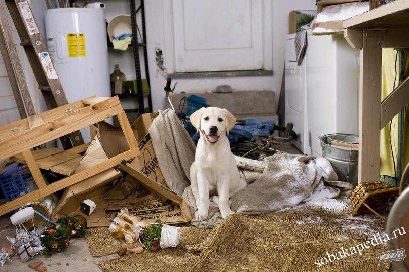 Как отучить собаку или щенка грызть вещи дома