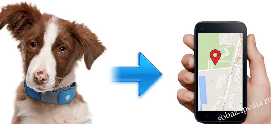 Как выбрать ошейник с GPS навигатором для собак — плюсы и минусы
