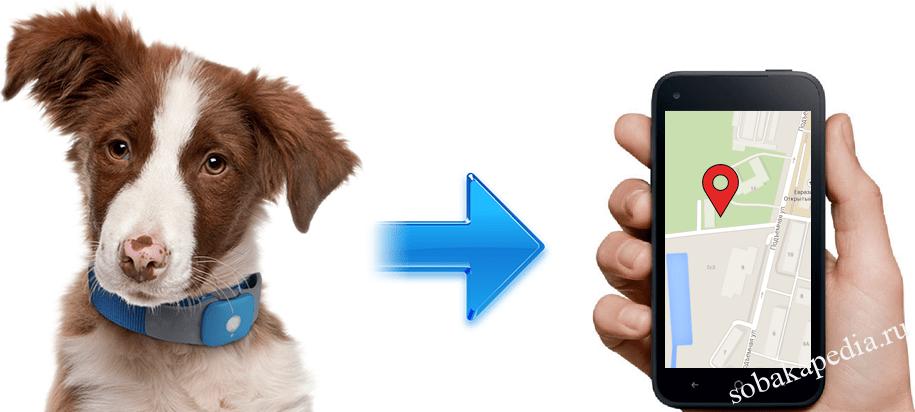 Как выбрать GPS-ошейник для собаки?