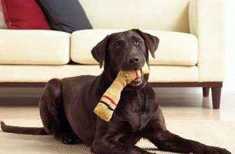 Как сделать игрушку для щенка и собаки своими руками
