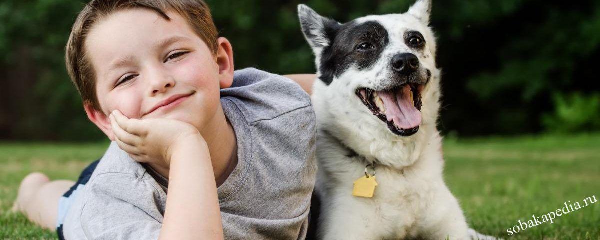 Как избежать нападения и укуса собаки
