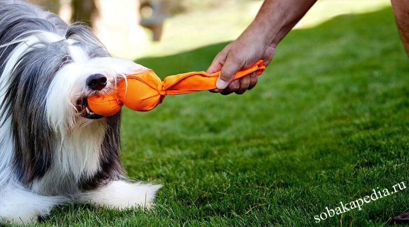Как научить собаку команде Дай