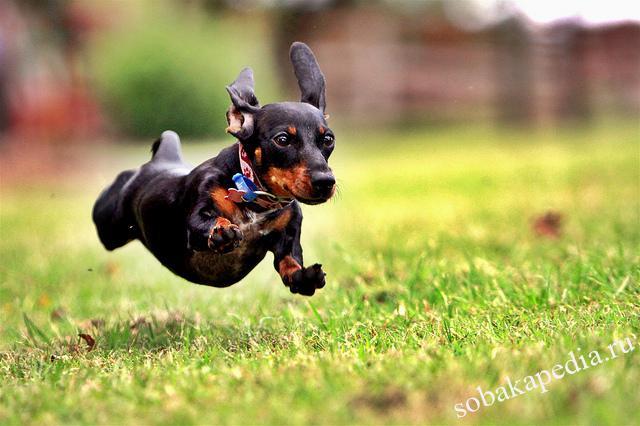 Как научить собаку команде ко мне быстро и понятно