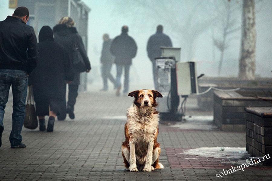 Проблемы бездомных собак