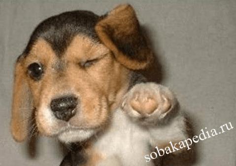 Как избежать агрессии собаки