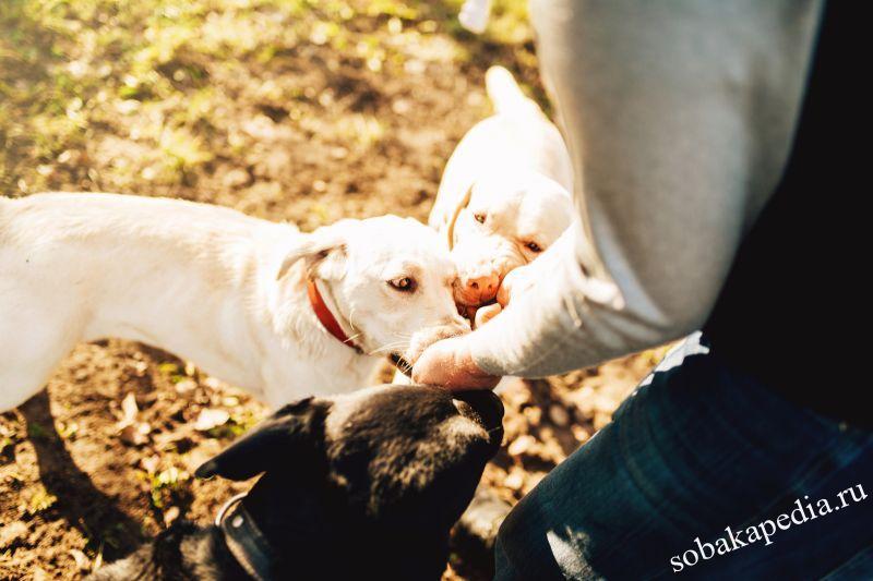 Как научить собаку искать предметы по запаху? Советы кинологов