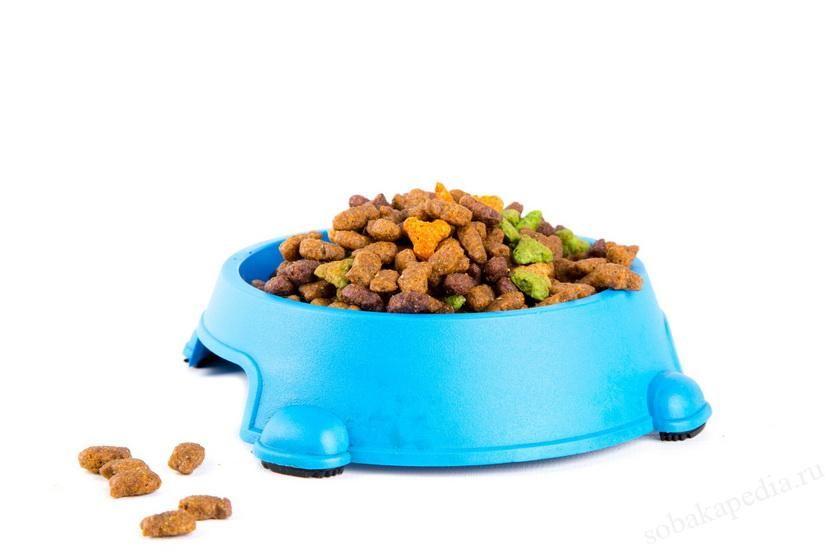 Состав сухого корма для собак. Полезные и бесполезные ингредиенты
