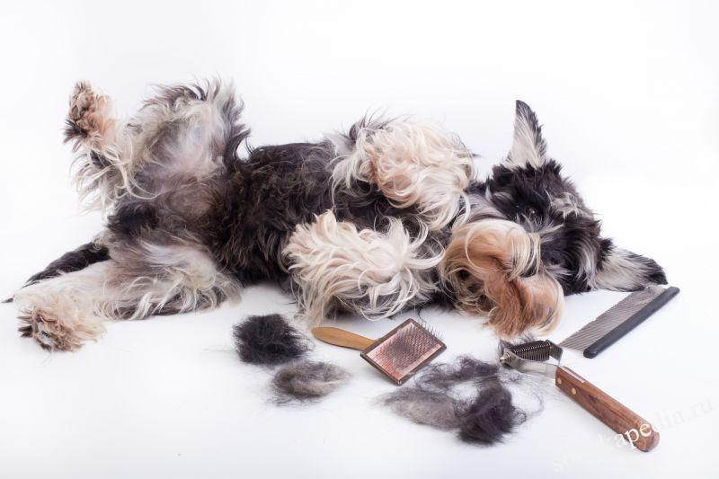Что такое тримминг собак?
