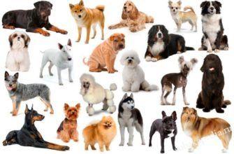 Важны ли породы собак