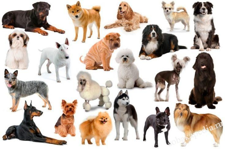 Так ли важны породы собак