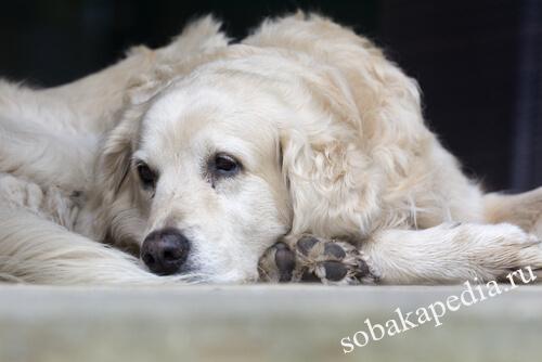 Болезни собак: симптомы, лечение, профилактика