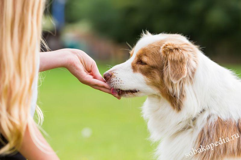 Лакомства для собак. Какие бывают и как выбрать?