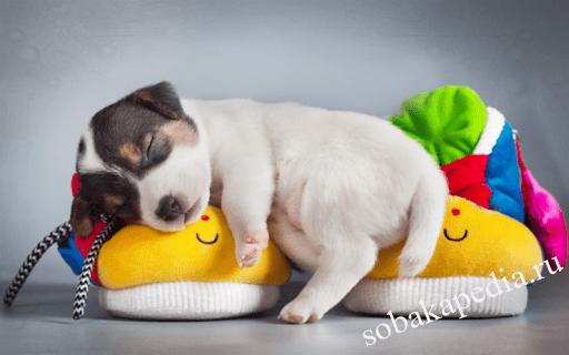 Обучение Послушанию щенка