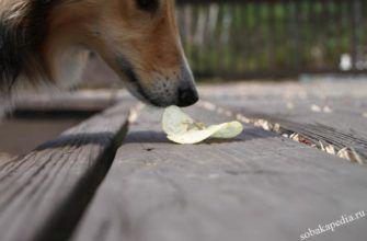 Как отучить щенка подбирать еду на улице