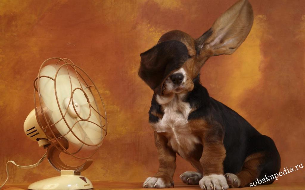 Защищаем собаку от перегрева в сильный зной