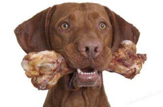 Можно ли давать собаке кости - за и против