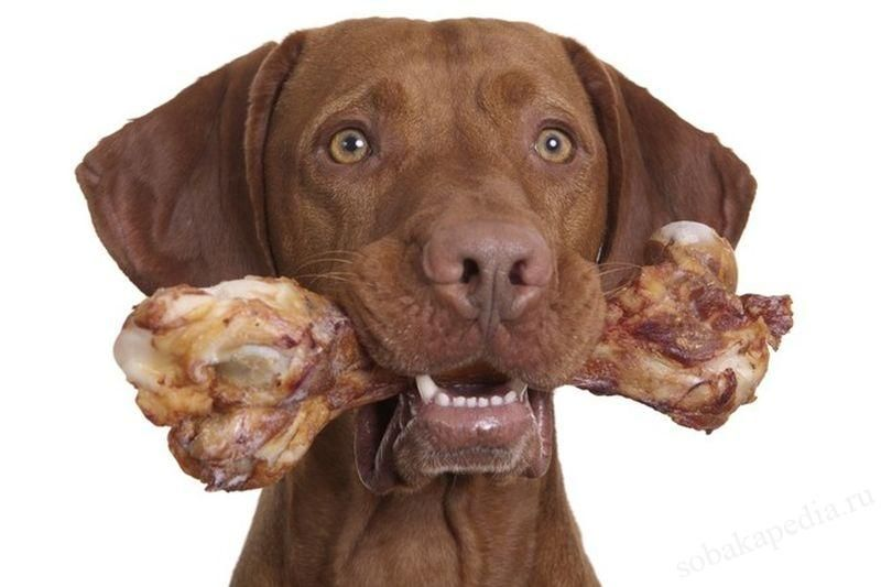 Можно ли собакам давать кости?