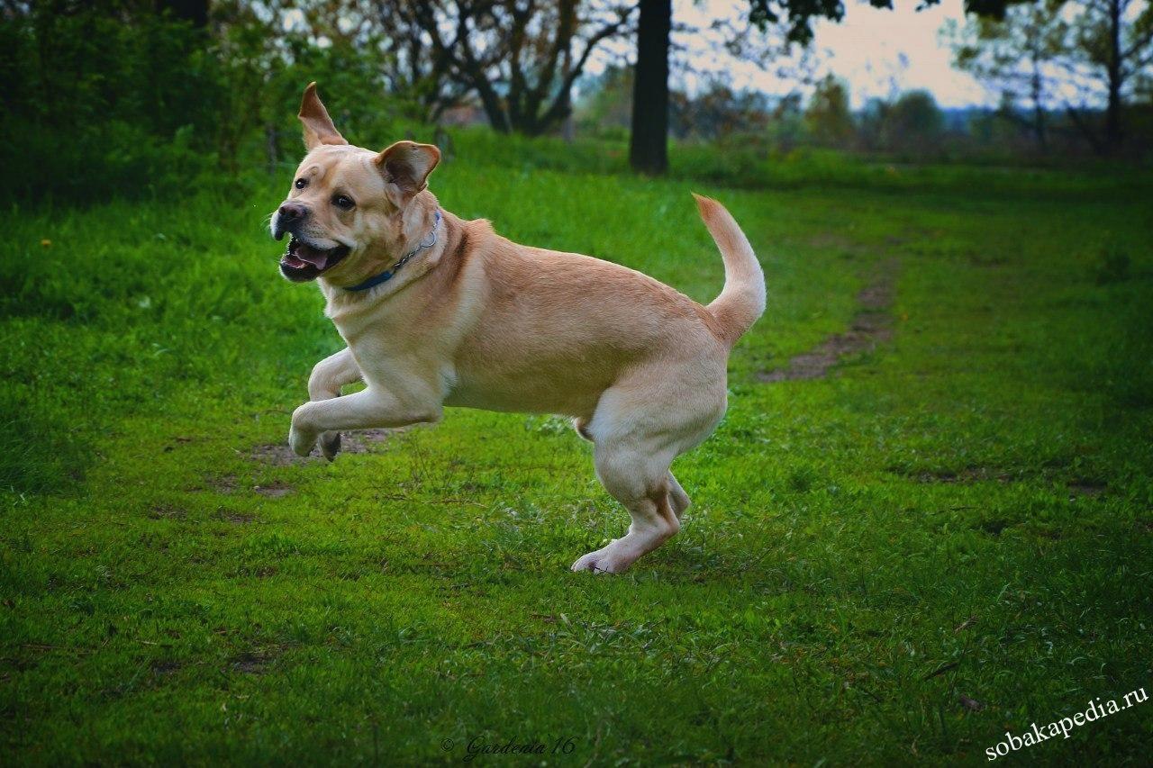 Учим собаку прыгать через спину