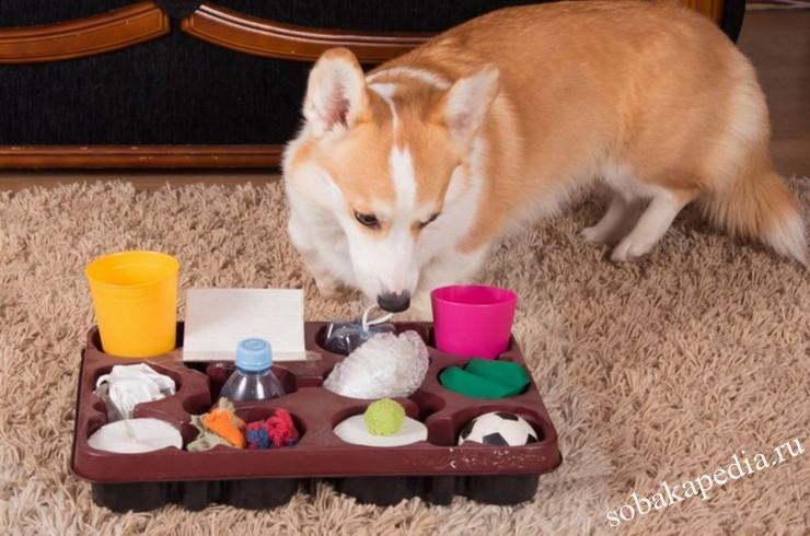 Как научить вашу собаку узнавать предметы по их названию