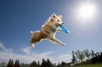 Как научить собаку веселым трюкам