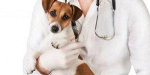 Стерилизация собаки — плюсы и минусы, особенности операции