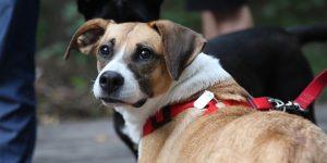 Правила выгула собак в общественных местах — кратко и доступно
