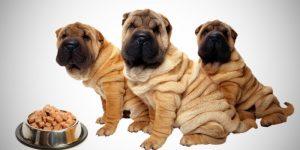 Чем кормить шарпея чтобы не было аллергии-рацион щенка и взрослой собаки